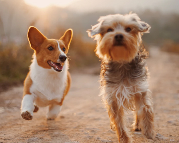 Glucosamine Chondroitin for Dogs