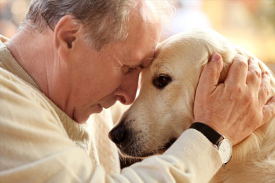 Glucosamine for Aging Pets