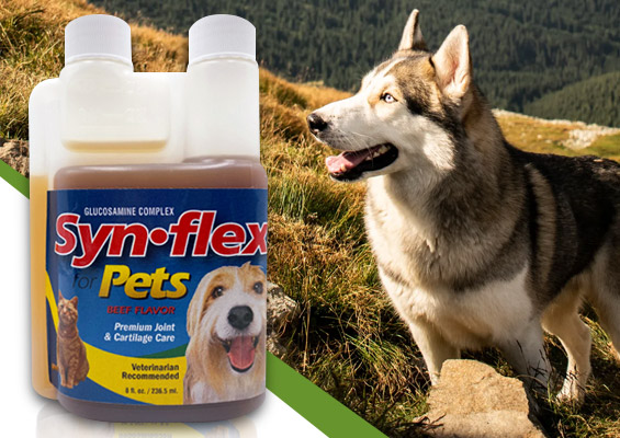 Glucosamine Product Reviews for Pets