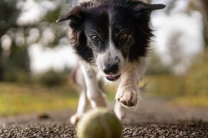 Why Synflex is Best Glucosamine For Dogs
